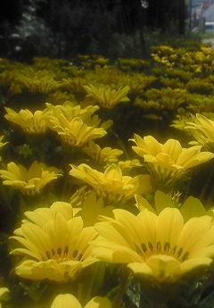 ゲンキンな花