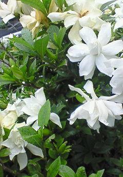 おかえりの花