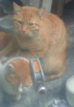 猫の肩たたき