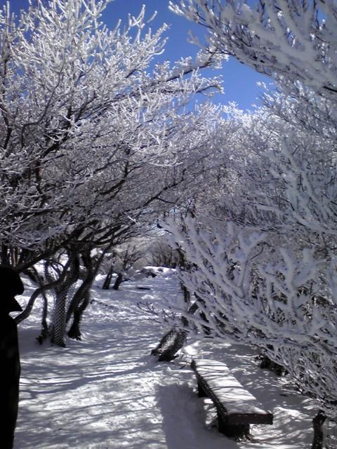 三重で樹氷