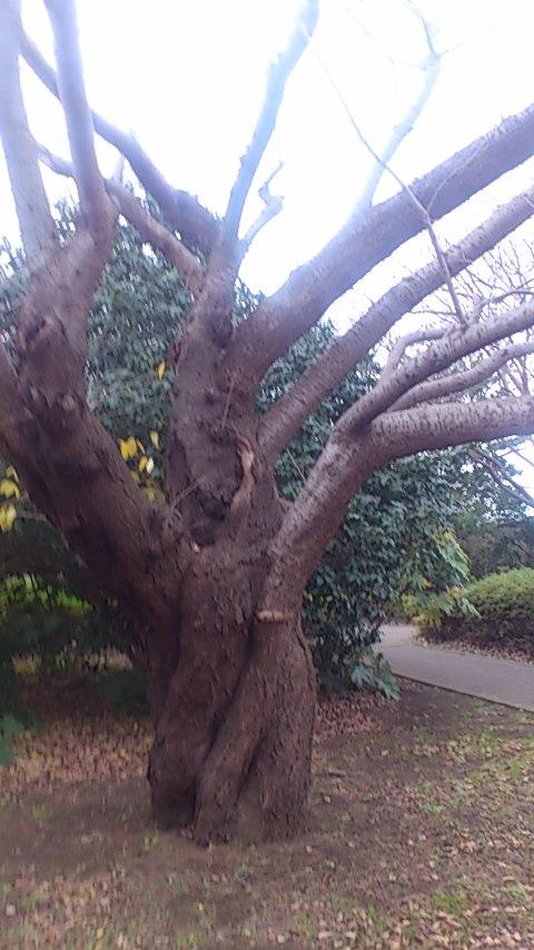 つるぴんの木